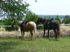 Quiet sleeping horses - Gypsy and Chester are happy to snooze while Steve and Debbie visit