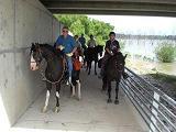 Horse Walkway under Lucas Rd Bridge