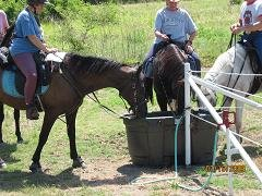 Watering horses at Highland Park Trail Head